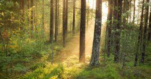 Wald und Licht