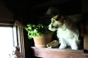 Sauna-Hunde